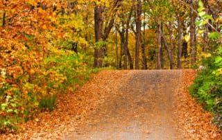 bushybusiness newsletter blog 4