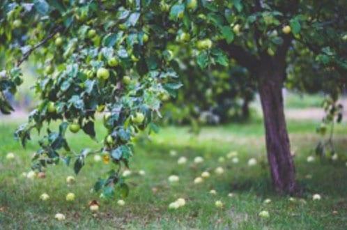 bushybusiness newsletter blog 5