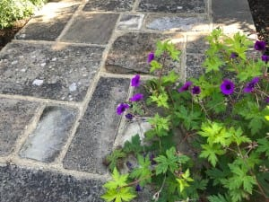 Bushy Business Gardening - Services – Consultation