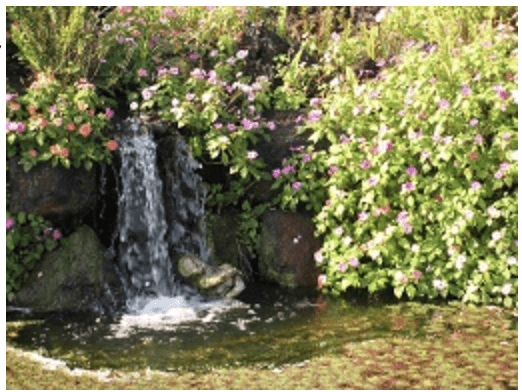 Bushy Business - The great July garden escape